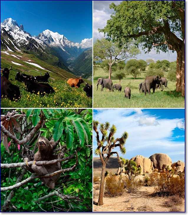 природно территориальные комплексы
