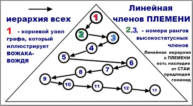 Иллюстрация линейной иерархии среди членов ПЛЕМЕНИ