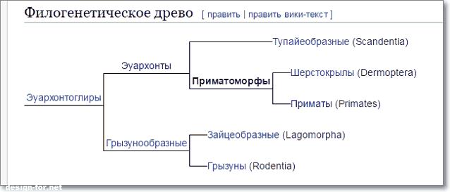 филогенетическое древо приматов