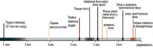 Хронологическая схема роста размера мозга гоминид