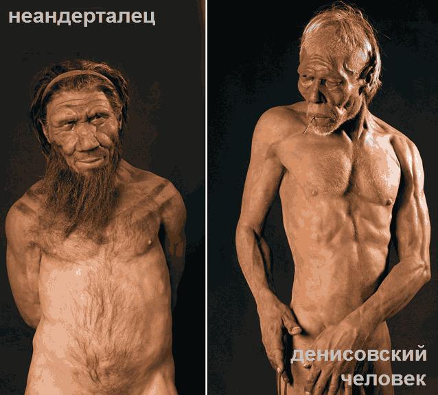 предполагаемый облик неандертальца и денисовца