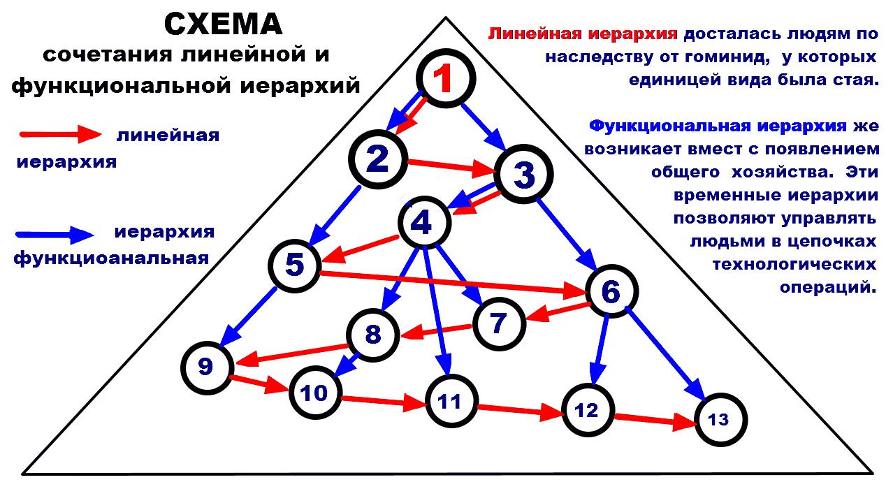Член иерархии
