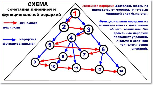 линейная и функциональная иерархия