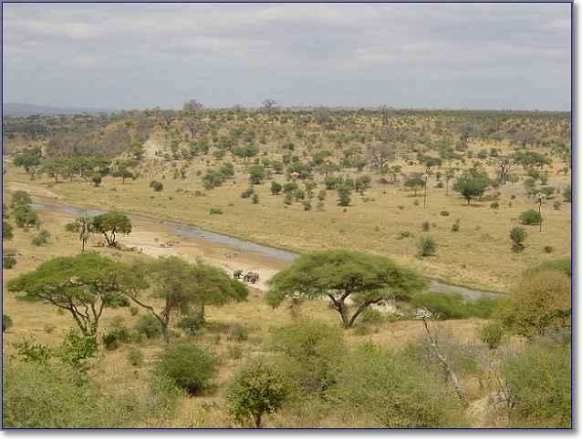 Саванны в Африке изображение из Википедии