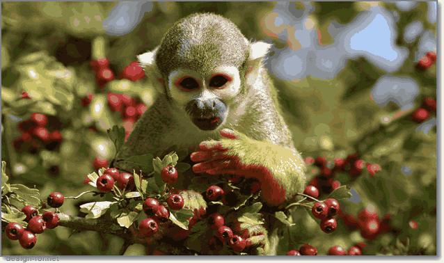 стереоскопическое цветное зрение обезьян