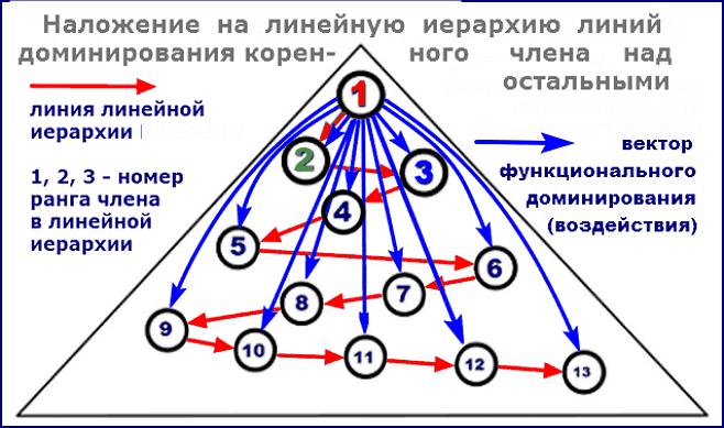 наложение функциональной иерархии коренного члена на линейную иерархию системы
