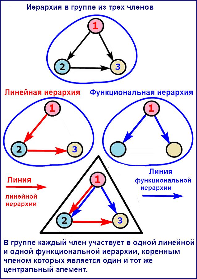 Линейная и функциональная иерархии в группе