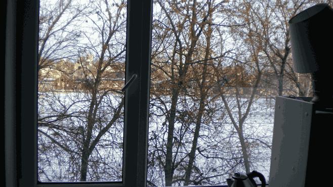 большая 1 вид из окна на кроны деревьев