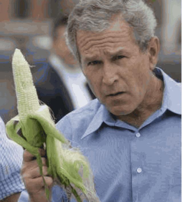 Буш кукуруза
